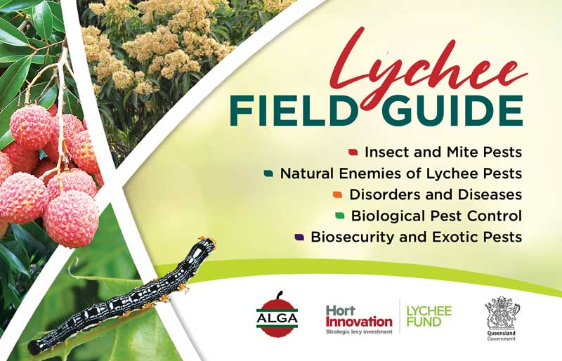 Lychee Field Guide cover