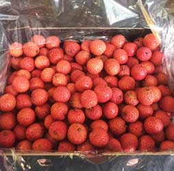 Lychee variety Kwai Mai Pink destined for export to the USA